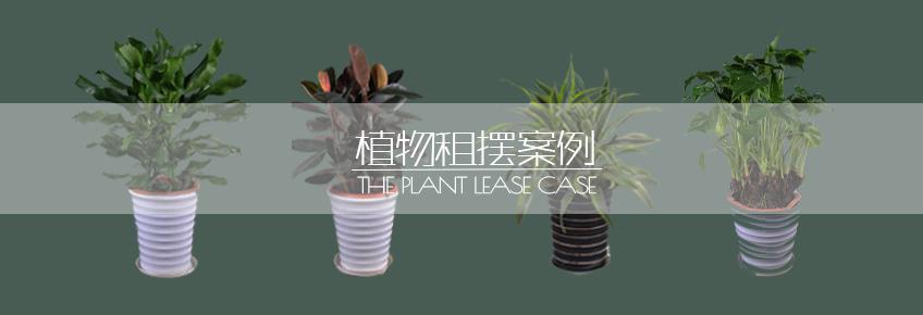 植物租摆案例.jpg